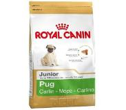 Royal Canin Breed Pug Junior pour chiot - 3 x 1,5 kg